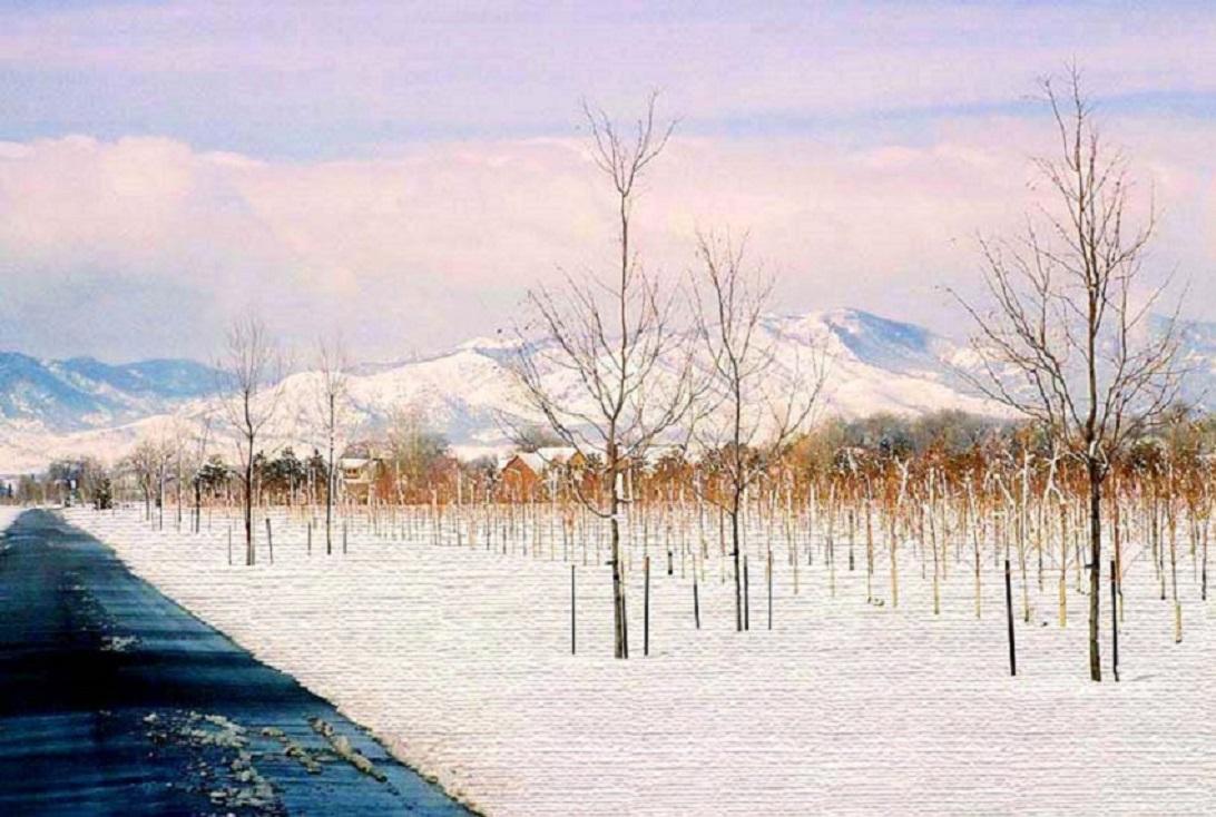 bleak trees by J, Spahr-Summers