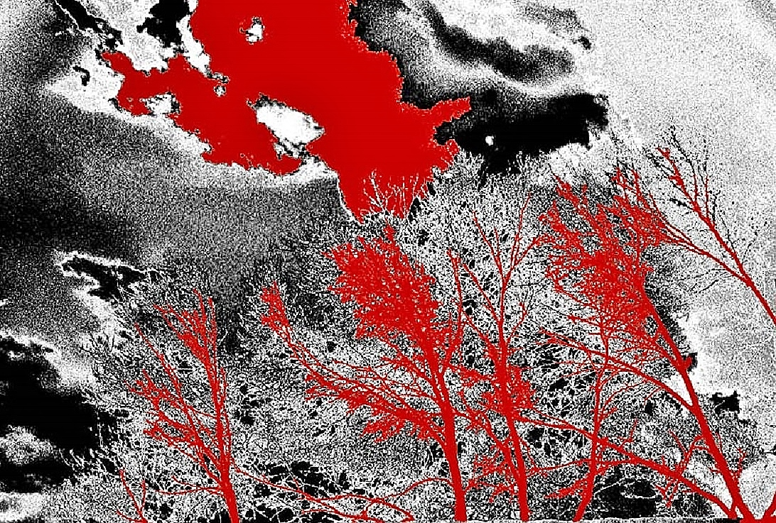 blood-letting in the backyard Copyright 2015, J. A. Spahr-Summers